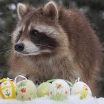 Beitrag - verschneite Ostern